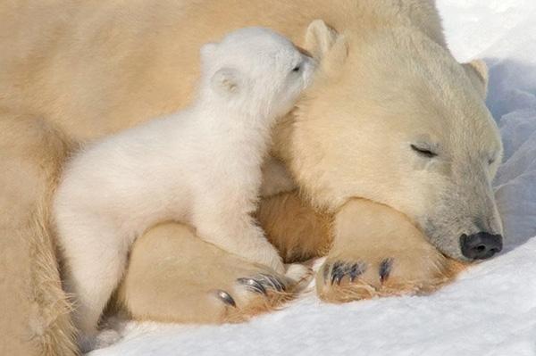 Tuy con vẫn còn rất buồn ngủ, nhưng trời sáng rồi, mẹ cũng dậy đi thôi...