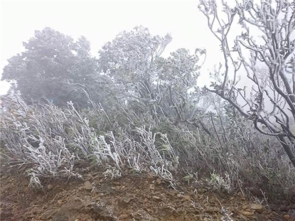 Ảnh người dân chụp lại tại Mẫu Sơn - Lạng Sơn, băng giáphủ trắng xóa cây cối.(Ảnh: Internet)