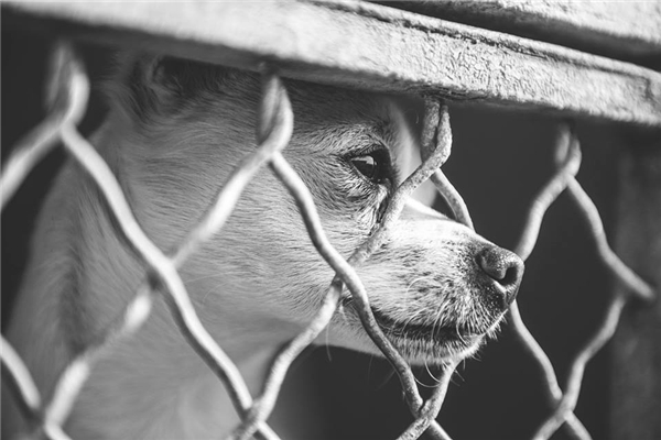 Oliver sau hàng rào