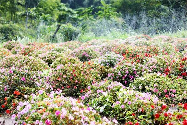 Vùng đất Bắc Tây Nguyên thời khắc giao mùa đẹp đắm say lòng người
