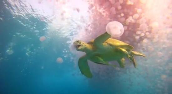 Một chú rùa đang săn mồi. (Ảnh: Internet)