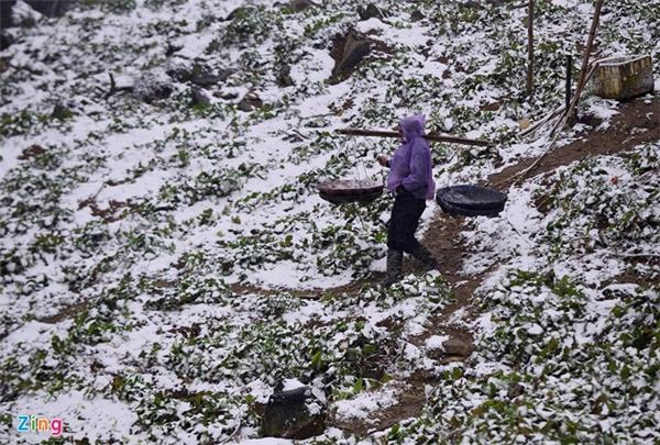 Nhiều người phải mặc áo mưa, bất chấp mưa tuyết nặng hạt để đi cắt rau.