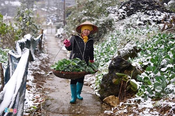 Chị Nguyễn Thị Thiều tất bật gánh hàng rau ra chợ bán, nhà có 1 ha các loại rau, nhưng đều bị hỏng hết, do tuyết vùi lấp.