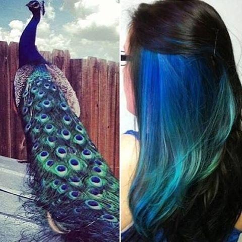 Một kiểu tóc đầy cảm hứng từbộ lông tuyệt đẹp của những chú công. (Ảnh: Internet)
