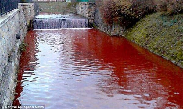 Tháng 12/2014, người dân thị trấn Myjava ở Slovakia phải kinh hãi khi nước con sông chảy qua địa phương bất ngờ chuyển sang màu đỏ như máu chỉ sau một đêm. Khinước chuyển sang màu đỏ, nhiều người nghĩ ngay tới thủy triều đỏ. Tuy nhiên, loại tảo gây nên thủy triều đỏ lạichỉ tồn tại trong nước biển, chứ không phải nước ngọt.Ảnh: Internet
