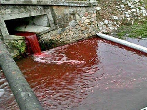 Lời giải thích của các chuyên gia càng rõ ràng hơn khi nói nước trong sông, hồ, suối thường xuyên chuyển sang màu đỏ bởi nguyên nhân sinh học. Trong phần lớn trường hợp, nước chuyển thành màu đỏ do hoạt động của những loại vi khuẩn yếm khí có khả năng tạo màu. Vi khuẩn yếm khí xuất hiện trong nước khi lượng oxy giảm xuống dưới mức bình thường.Và nhiều khi, nước sông trở nên đỏ quạch là do chính hành động tàn phá môi trường của con người. Ảnh: Internet