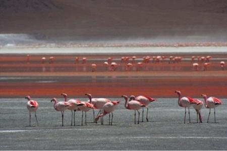 Điểm đặc biệt nữa lànơi đây được coi là sứ sở của loài chim hồng hạc nổi tiếng và hơn 50 loài chim khác nữa. Du khách có thể chiêm ngưỡngloài chim hiếmnày baylượn trên mặt hồ. Ảnh: Internet