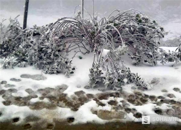 Mọi thứ từ đường đến cây cối đều phủ màu tuyết trắng.