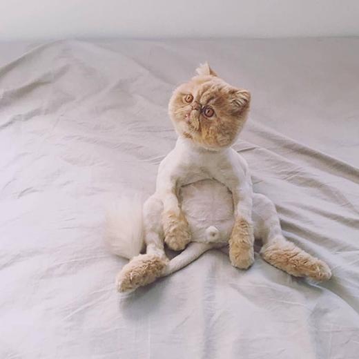 Bật cười với chú mèo lăn ra sung sướng khi nghe bài hát yêu thích
