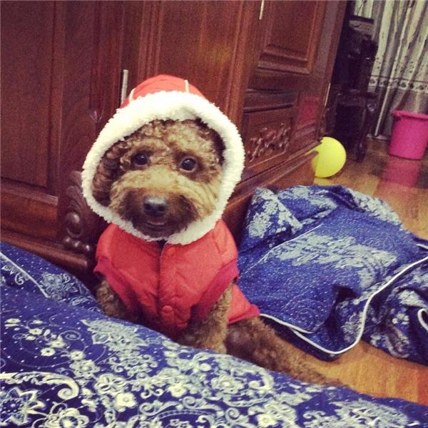 Những bộ quần áo xinh xắn, ấm ápdành cho thú cưng luôn là ưu tiên hàng đầu đối với chủ nuôi.(Ảnh: Internet)