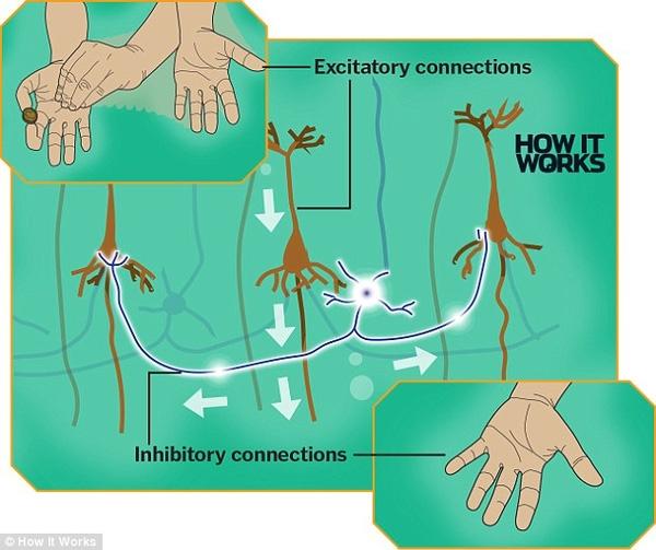 Đồng thời, não bộ ức chế luôn các hình ảnh về tay phải. Do đó, sự chú ý dành cho tay phải bị xao nhãng đi, và kết quả là không ai nhận ra mánh khóe họ sử dụng.