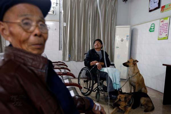 Suốt 14 năm liền, hai chú chó kéo anh đi khắp đường to, ngõ nhỏ trong huyện Long Du, đến mức người dân ngoài đường không còn cảm thấy tò mò hay lạ lẫm khi thấy cảnh đó. Hai chú chó Bối Nhĩ và La Nhĩ theo chân anh đến mọi địa điểm, từ nhà tới bệnh viện.