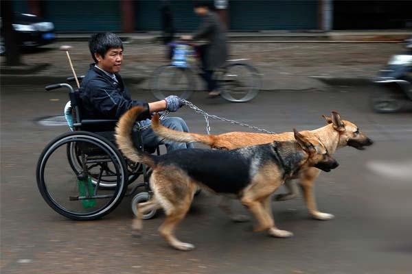 Hình ảnh hai chú chó kéo xe cho chủ tật nguyền suốt 15 năm khiến không ít người cảm động. Hầu hết đều hy vọng, đôi chó có thể mãi gắn bó với Phương Kiến Quốc, làm người dẫn đường cho anh suốt cuộc đời.