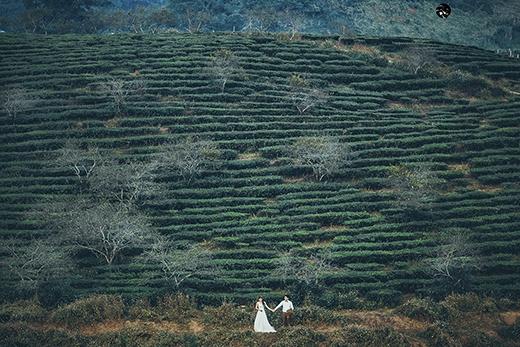 Bộ ảnh cưới đẹp như mơ ở Mộc Châu của cặp đôi oan gia