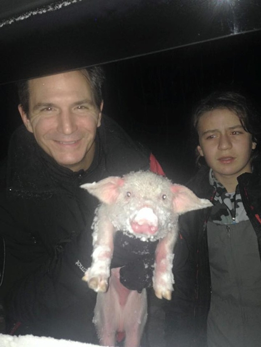 Sự hồi sinh kì diệu của chú lợn suýt chết cóng giữa bão tuyết