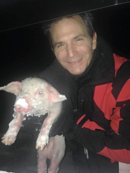 Smith nói thêm rằng chú lợn nằm yên bất động nên anh không chắc nó còn sống hay không. Chỉ khi anh bế nó lên thì liền nghe tiếng nó kêu eng éc inh tai.(Ảnh: Internet)