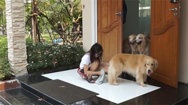 """Các chú chó đã xong """"thủ tục"""" lau chân kiên nhẫn đứng đợi bạn mình ở cửa."""