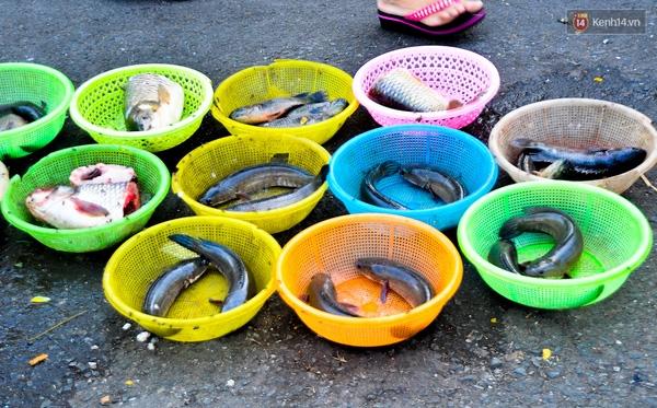 Cá được phân sẵn vào từng chiếc rổ để bán.