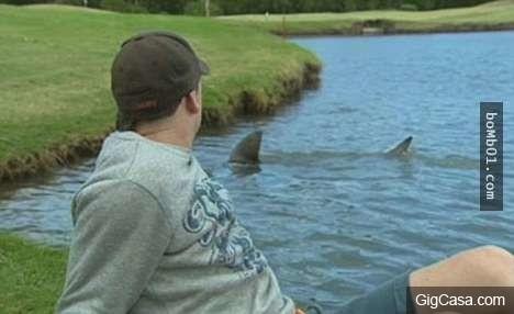 Sân gold ở Úc bị cá mập bao quanh. (Ảnh: Internet)