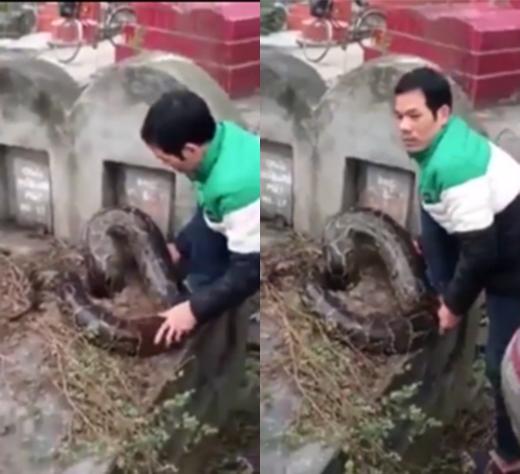 Nam thanh niên cố gắng lôi con trăn khổng lồ ra khỏi ngôi mộ. (Ảnh: Internet)