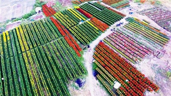 """Ngoài ra, nhiều người trồng hoa cũng cho biết, năm nay mặc dù thời tiết thuận lợi nhưng tiền giống, chậu, phân bón, nhân công tăng từ 5 -10% so với năm ngoái, nên kéo theo giá hoa cũng tăng theo. Nhìn hình ảnh này, làng hoa giữa lòng Sài Gòn cũng đẹp lộng lẫy bởi sắc màu và độ """"hoành tráng"""" của diện tích trồng, cho cảm giác giống những đồng hoa bạt ngàn ở Hà Lan.Ảnh: Internet"""