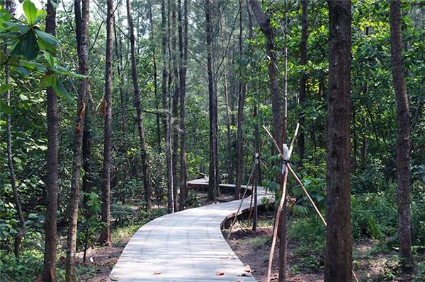 Chụp ảnh: không gì đẹp hơn một lối đi lát gỗ ẩn giữa rừng cây xanh như thế này. Gợi ý một số nơi chụp ảnh đẹp: cánh đồng Lalang, Horsfieldia Irya, Calophyllum Inophyllum.(Ảnh: Internet)