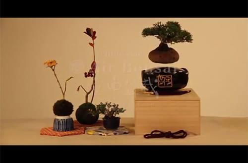 Trố mắt với bonsai lơ lửng, thú chơi cây mới của người Nhật