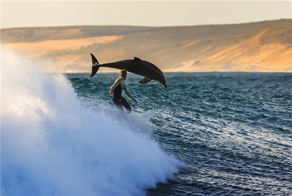 Lướt sóng với cá heo ở Kalbarri, Úc. Matt Hutton chính là nhiếp ảnh gia đã chụp lại khoảnh khắc này.Ảnh: Internet)