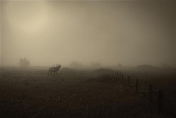 George Burgin đãbắt được hình ảnh này một cách tài tình.Sương sớm và những con hươu ẩn mình ở Billings, Montana. (Ảnh: Internet)