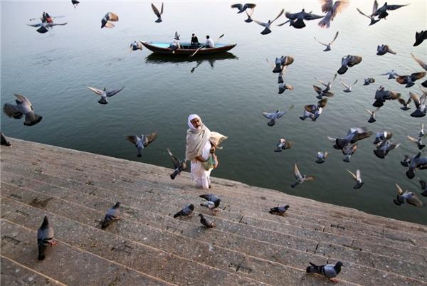 Những đàn chim bay ở Varanasi,Ấn Độ qua ống kính của Suditi Guharoy.(Ảnh: Internet)
