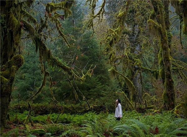 Và cuối cùng là hình ảnh cô gái như một nàng công chúa đang đứng trong rừng được chụp bởi Justin Jung.Công viên Quốc gia Olympic (Ảnh: Internet)