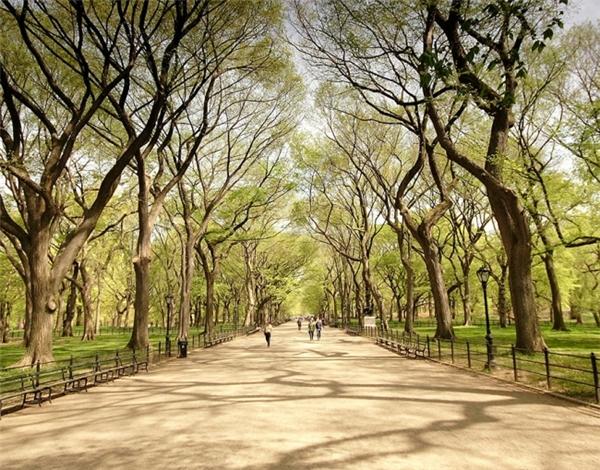 Con đường quen thuộc trong Central Park. (Ảnh: James)
