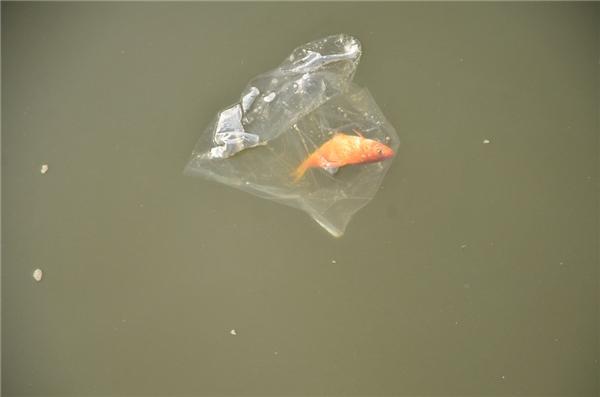 Nhiều người dân thiếu ý thức thả cá chép, rồi vứt túi ni-lông xuống sông. Ảnh: Internet
