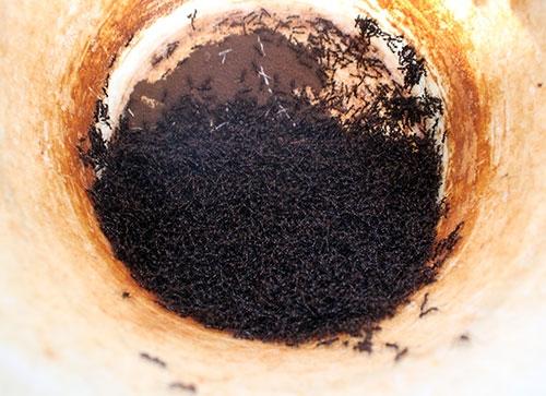 Câu kiến độc: Nghề lạ mới nổi với thu nhập khủng