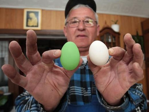 Trước đây, từng có một nông dân Croatia tìm thấy quả trứng xanh. (Ảnh: Internet)