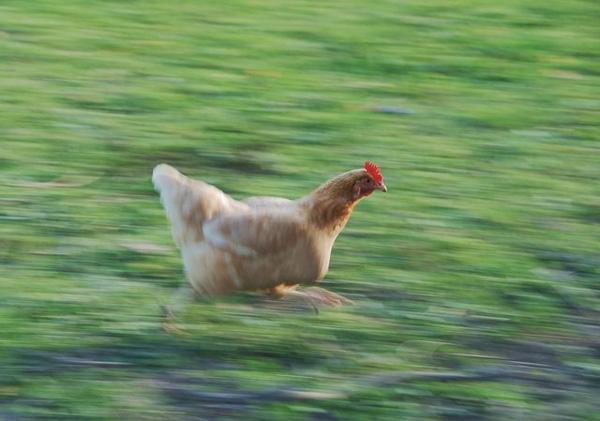 12. Trong khi đám con trai cứ thấy con gái đi qua là trêu thì con gái lại vắt giò lên cổ chạy như chó đuổi đằng sau.