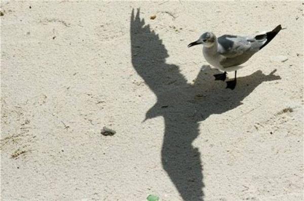 """""""Ồ, hóa ra mình biết bay rồi à? Thì ra cảm giác bay nó cũng chẳng khác cảm giác đứng trên mặt đất là bao, thế mà mấy thằng chim khác cứ chọc mình mãi...""""(Ảnh: Internet)"""
