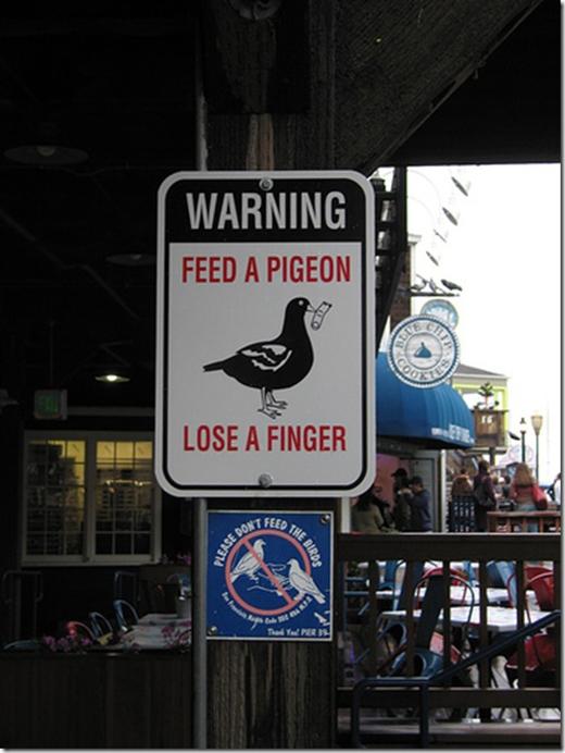 """""""Cảnh báo: Cho bồ câu ăn, mất một ngón tay."""" Những con bồ câu với vẻ ngoài hiền lành không nhắm đến vụn bánh mì của bạn đâu mà là ngón tay thịt thà béo ngậy của bạn đấy. (Ảnh: Internet)"""