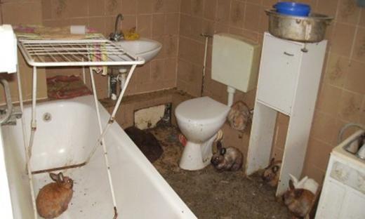 """""""Sưu tập"""" rác hay nuôi nhiều mèo, thỏ... là một trong những biểu hiện của người mắcHội chứng Diogenes. (Ảnh: Internet)"""