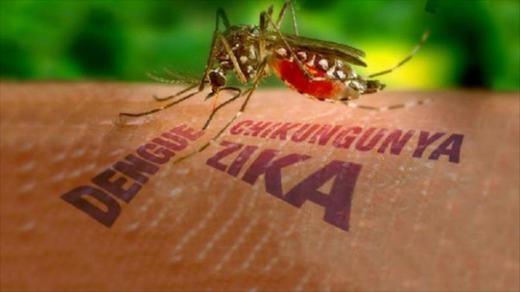 Loài muỗi Eedes là loài truyền bệnh. (Ảnh: Internet)
