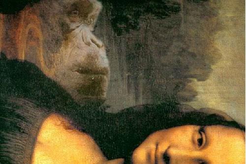 Gần đó là một con khỉ đột... (Ảnh: ABC News)