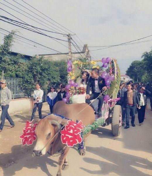 Màn rước dâu bằng xe bò tại Việt Nam. (Ảnh: Internet)