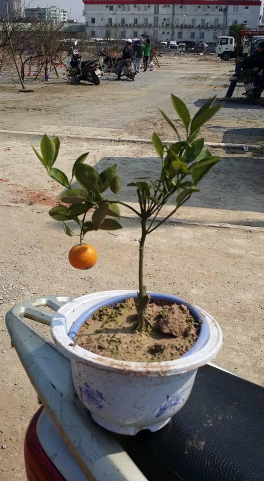 Một cây làm chẳng nên non...(Ảnh: Internet)