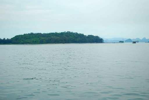 Và câu chuyện đó diễn ra ngay tại một đảo khỉ giữa biển khơi ở Cẩm Phả, Quảng Ninh.Đảo Rều (hay còn gọi là đảo Khỉ) có diện tích 22 ha nằm cách cảng Vũng Đục (phường Cẩm Đông, TP Cẩm Phả) khoảng 1km. Ảnh: Internet