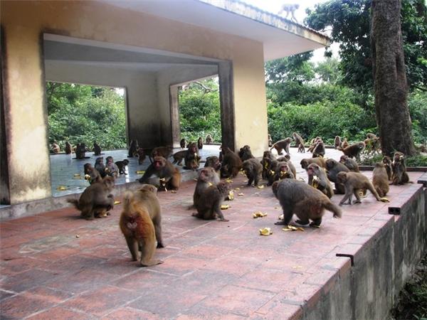 Hiện trên đảo khỉ này có khoảng 14 người, trong đó có 4 cặp vợ chồng cưới nhau rồi sinh con trên đảo. Tất cả những cư dân của đảo khỉ này đều đến với công việc một cách tình cờ. Theo đó, họ hoàn toàn không nộp đơn xin việc, hay được cử ra đảo khỉ để làm việc. Mà tất cả đến đảo bằng tình yêu với hòn đảo khỉ này. Ảnh: Internet