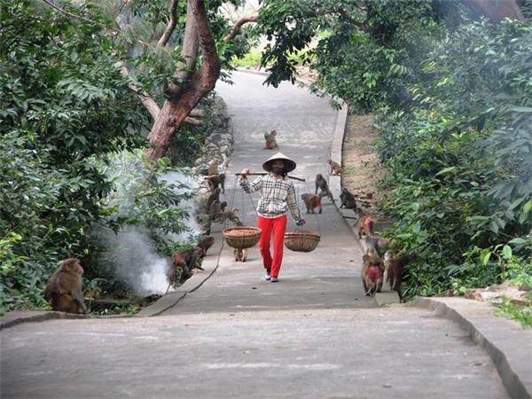 """Lê Thị Khuyên (SN 1991) – người đã làm việc trên đảo khỉ hơn 6 năm nở một nụ cười tươi tắn cho biết: """"Mình ra đây làm việc cũng là một dịp tình cờ, khi đó người yêu mình giờ là chồng đang công tác tại đảo khỉ đưa ra đây chơi. Khi lên đảo nhìn thấy đàn khỉ tinh nghịch nên thích lắm. Sau đó mình ở lại mấy hôm để phụ anh chị công việc chăm sóc khỉ thì được ban quản lí đảo thấy mình yêu thích bầy khỉ, nên đồng ý luôn cho làm việc luôn"""". Ảnh: Internet"""