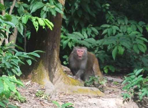 Tuy nhiên những người làm công việc trên đảo khỉ cũng có những nỗi buồn riêng, đó là họ phải hi sinh tình cảm gia đình, chấp nhận xa người thân, chồng con… để ra đây làm việc. Ảnh: Internet