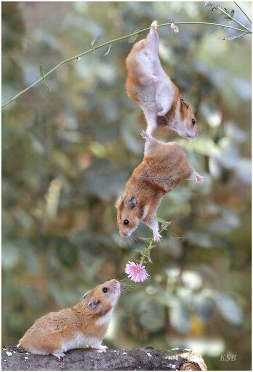 Trong tình yêu, đôi khi thằng bạn thân rất quan trọng! (Ảnh: Internet)