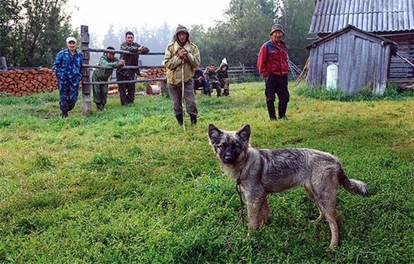 Chú chó nhỏ Naida cứu chủ sau hơn 10 ngày lạc trong rừng sâu.(Ảnh: Mirror)