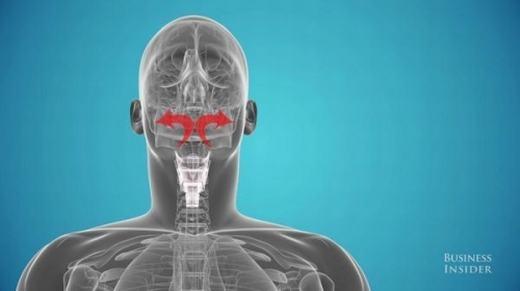 Ta có thể cảm nhận được âm thanh của chính mình không thông qua đường mũi và miệng. (Ảnh: Internet)